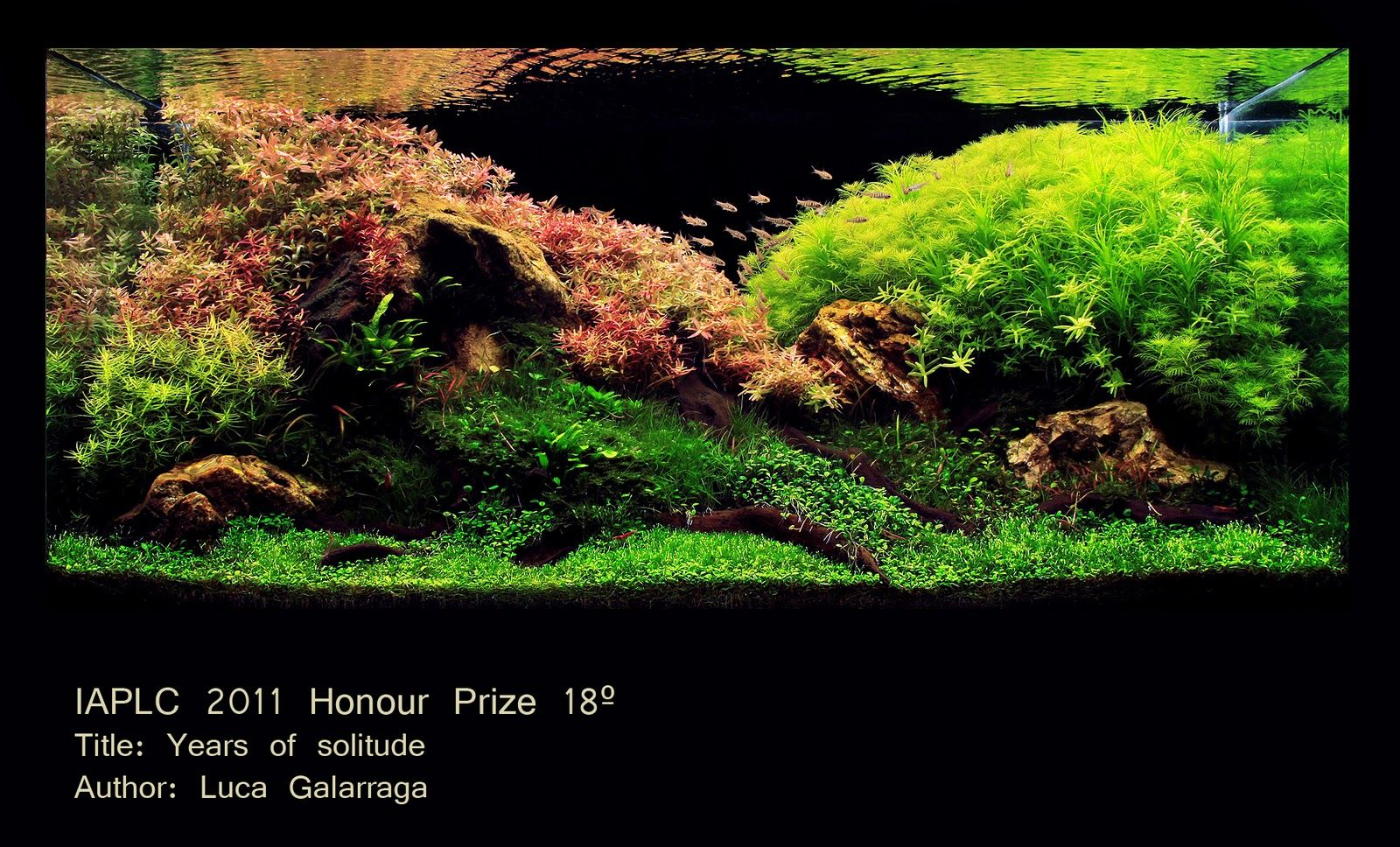 The International Aquatic Plants Layout Contest 2011 « Acuario Rosa