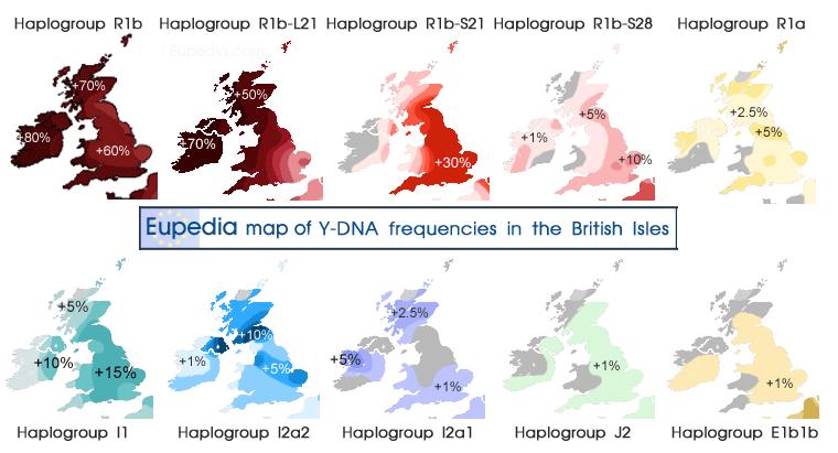 Distribution of Y-DNA haplogroups in Britain and Ireland | Genealogy