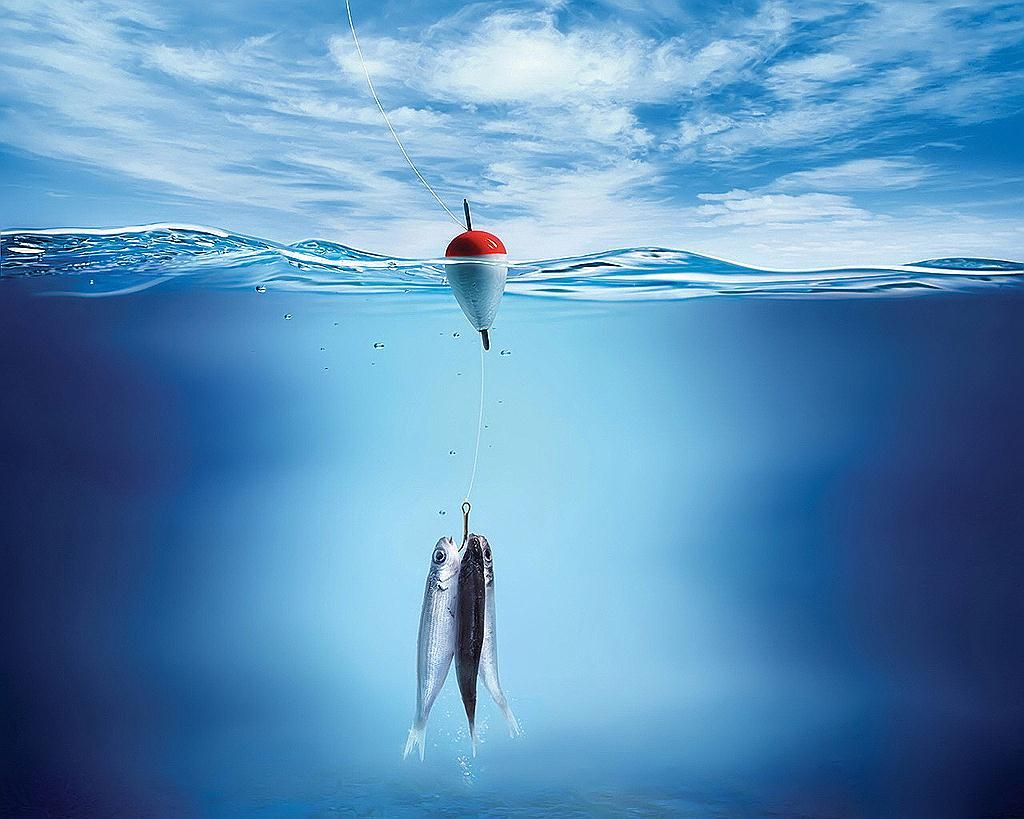 Fishing Fish Wallpaper Underwater Wallpaper Fish