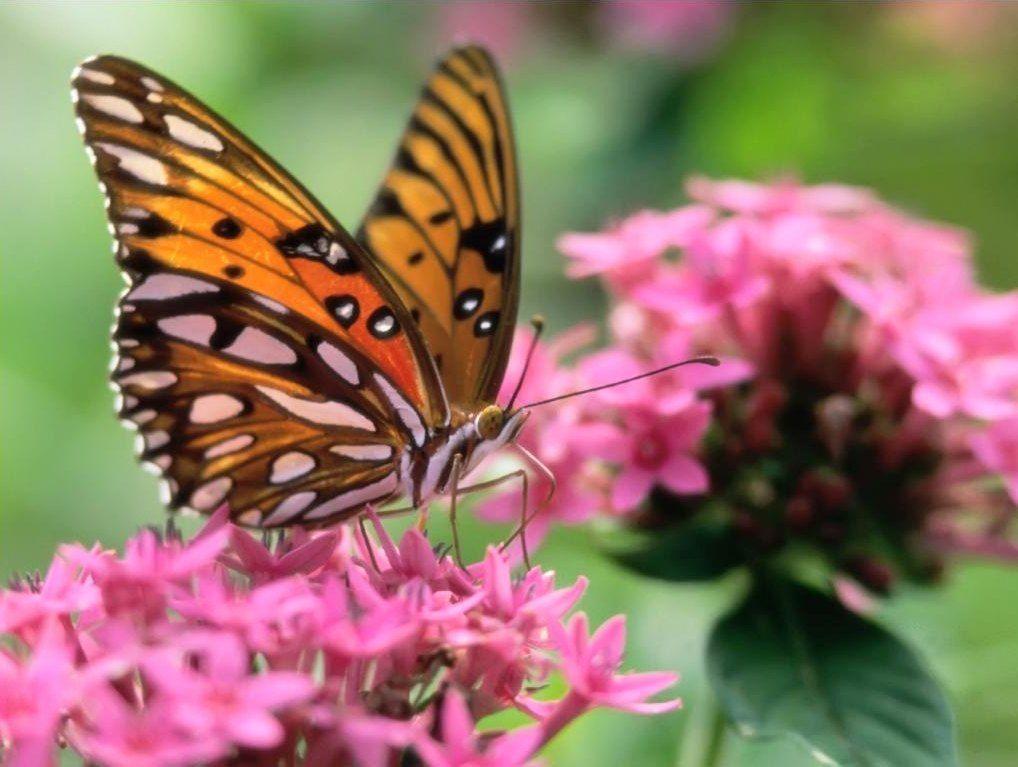 Unduh 95 Gambar Kupu Kupu Hinggap Di Bunga Mawar Paling Baru Gratis