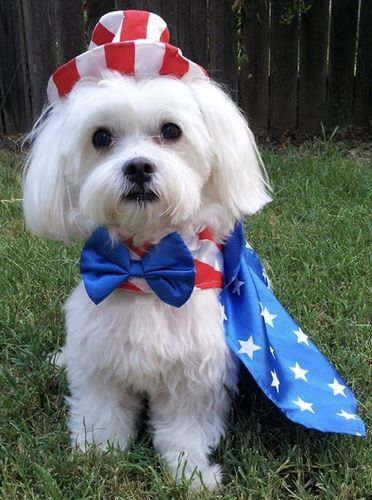 Patriotic And Cute Uncle Sam Dog Costume Cute Dog Costumes