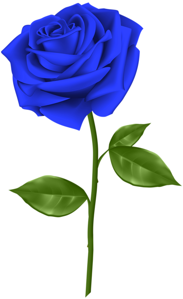 Blue Rose Transparent Png Clip Art Rose Flower Png Flower Background Images Flower Images