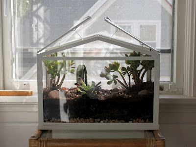 I Just Bought This So Excited Terrarium Ikea Greenhouse