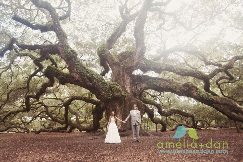 Wedding At The Angel Oak Tree In Charleston South Carolina Photographer Freshphotographyforhys