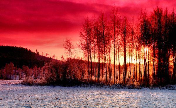 purple in winter by KariLiimatainen on DeviantArt