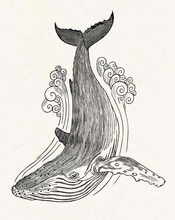 Fondo Arte De Ballena Dibujos Ilustracion De Ballenas