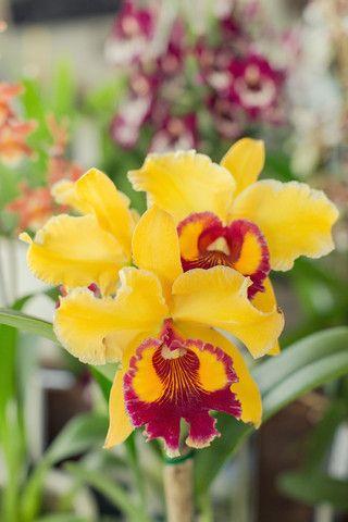 Orchids 101: Repotting & Reblooming (Saturday November 8th  2PM)