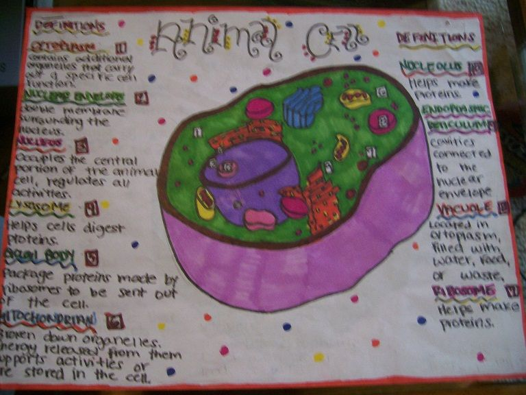 Pin by Wendy Costa on Ashley - 5th Grade Cell Project ...