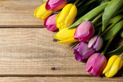 Banco De Imágenes Fotos Y Postales 22 Fotografías De Tulipanes De Colores Para Decorar El Fon Fondos De Pantalla Tulipanes Tulipanes Imágenes De Tulipanes