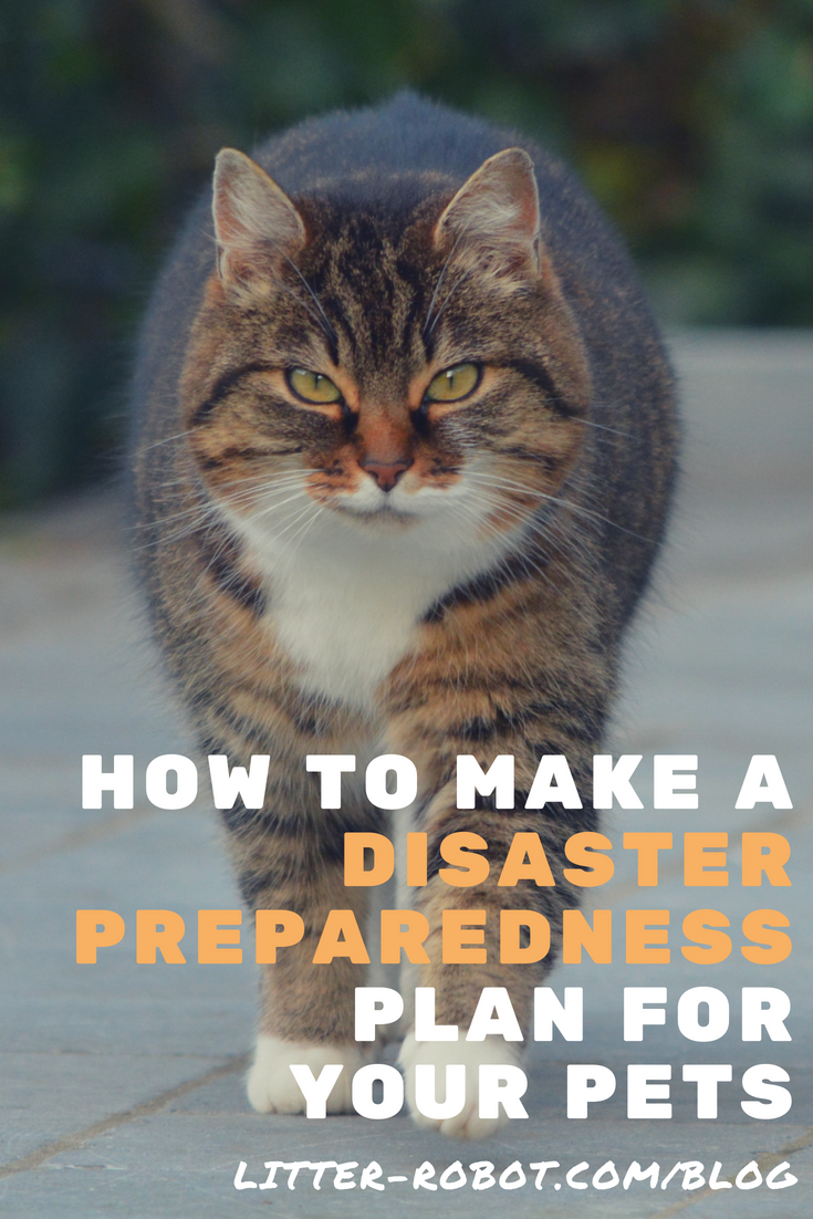 How To Make A Disaster Preparedness Plan For Your Pets