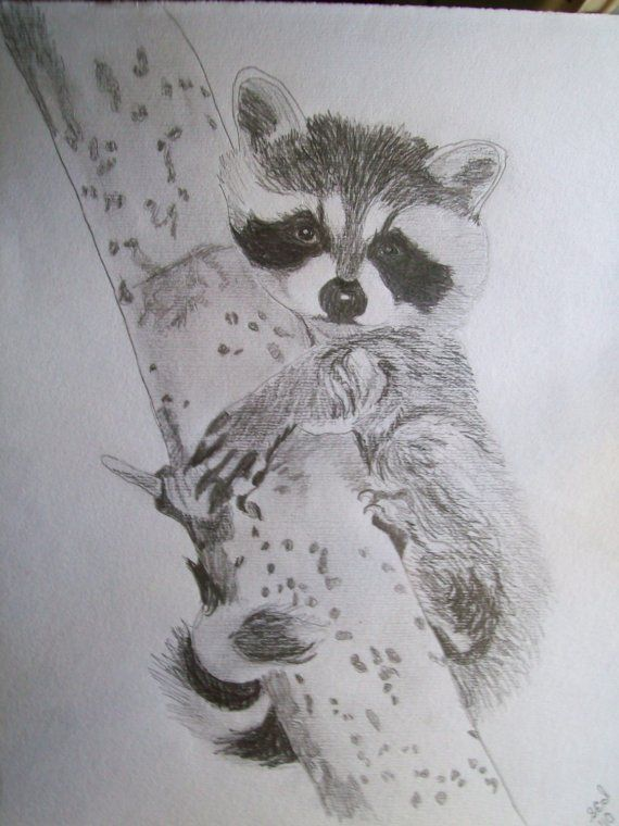 Items similar to Raccoon Portrait Pencil Sketch 9 x 12 U Provide Picture by Pigatopia on Etsy