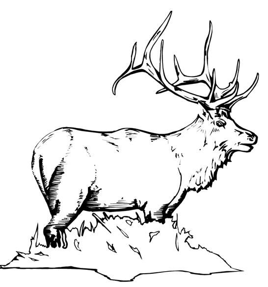 Free Animal Coloring Pages Elk