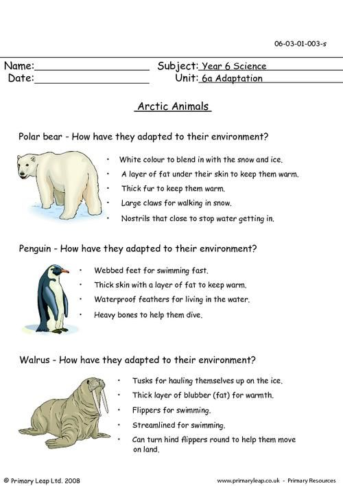 Arctic Worksheet Arctic Animals School Homework Pinterest