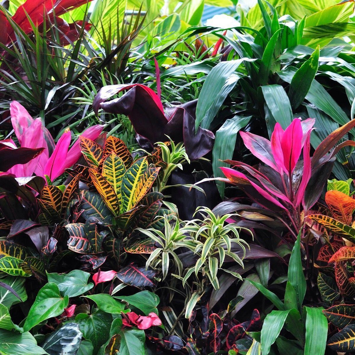 Tropical Garden Coloured Foliage Gorgeous 2020 Tropik Bahce