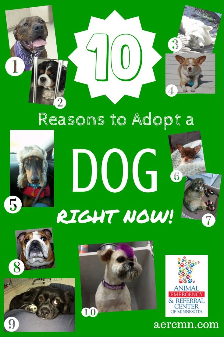Ten Reasons To Adopt A Dog Now Dogs Shelter Dogs Adoption