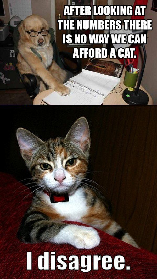 Funny Animal Pictures With Captions Cat and dog memes