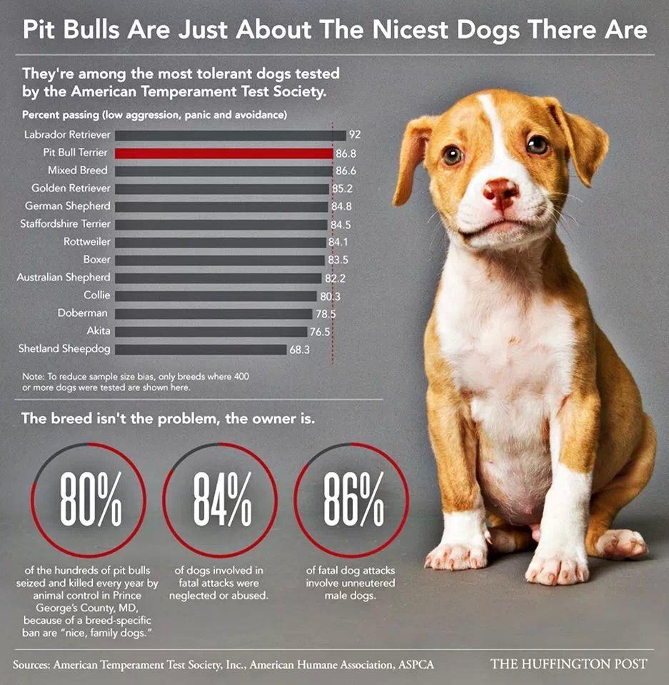 Pit bulls deserve better!