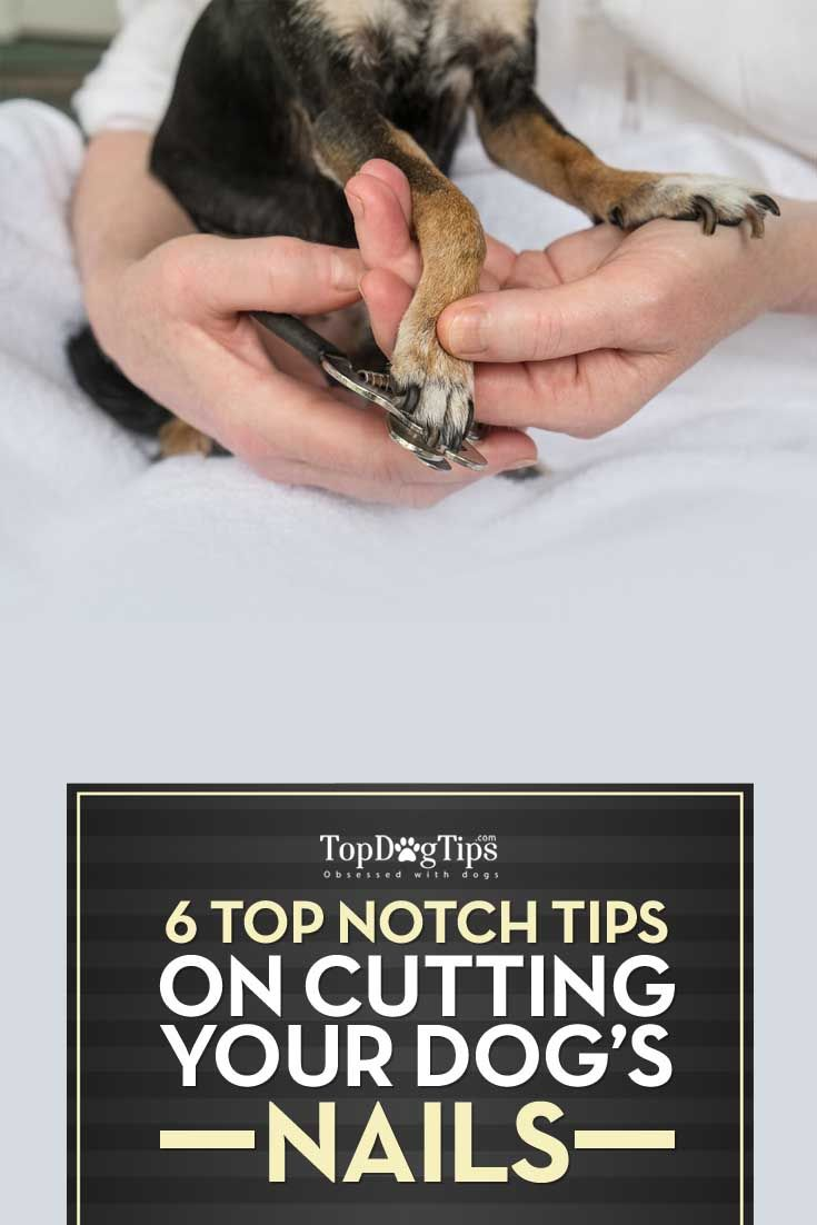 6 Tips for Cutting Your Dog\'s Nails | Dog nails, Dog and Fur babies
