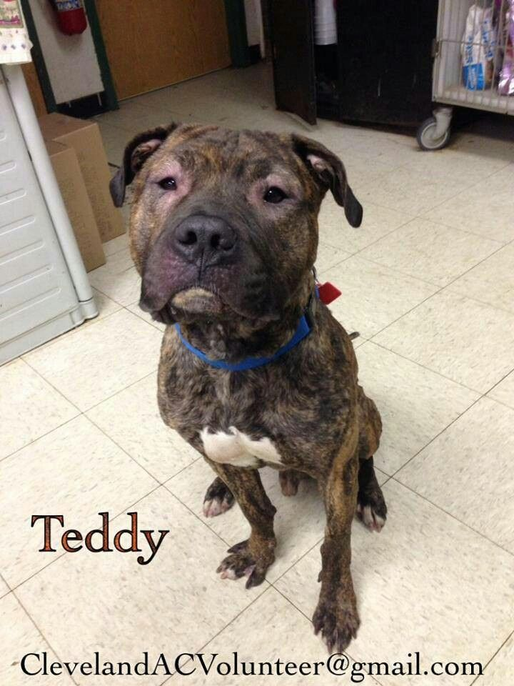 Cleveland Ohio Urgent Foster Rescue Needed Please Share Poor Teddy