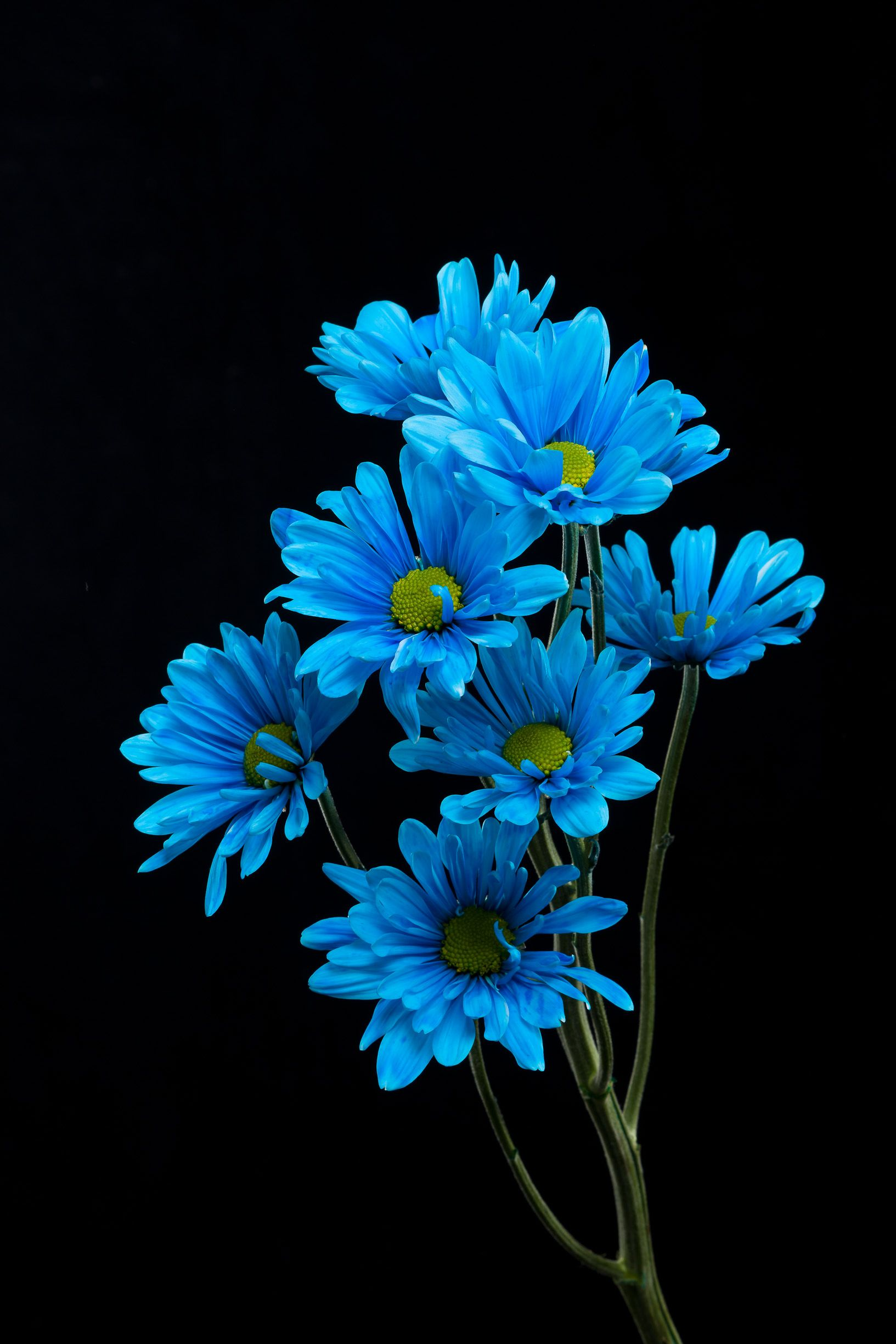Flowers Blue And Wallpaper Image Flower Wallpaper Flower Background Wallpaper Spring Wallpaper