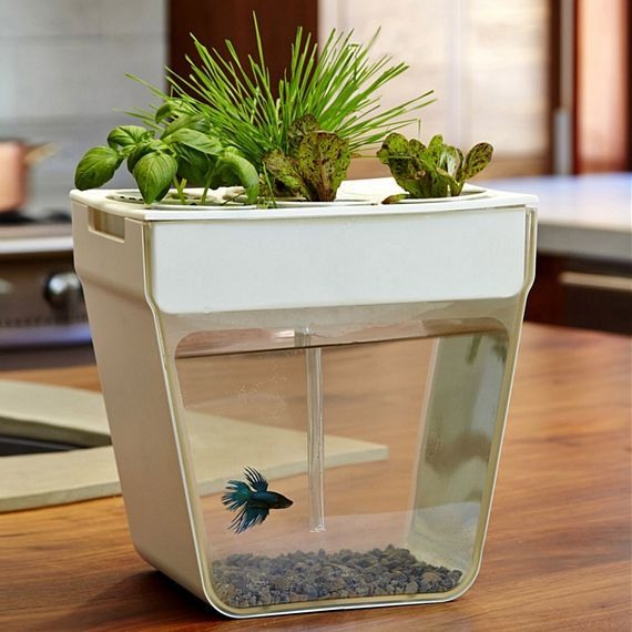 Aqua Farm   Self Cleaning Fish Tank That Grows Food. Fish Waste Feeds The  Plants. Plants Clean The Water. Includes Everything You Need To Get Started  As ...