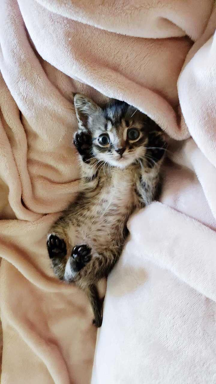 Funny Cats Information Are Offered On Our Website Read More And You Wont Be Sorry You Did Funnycats In 2020 Super Cute Kittens Pretty Cats Kittens Cutest