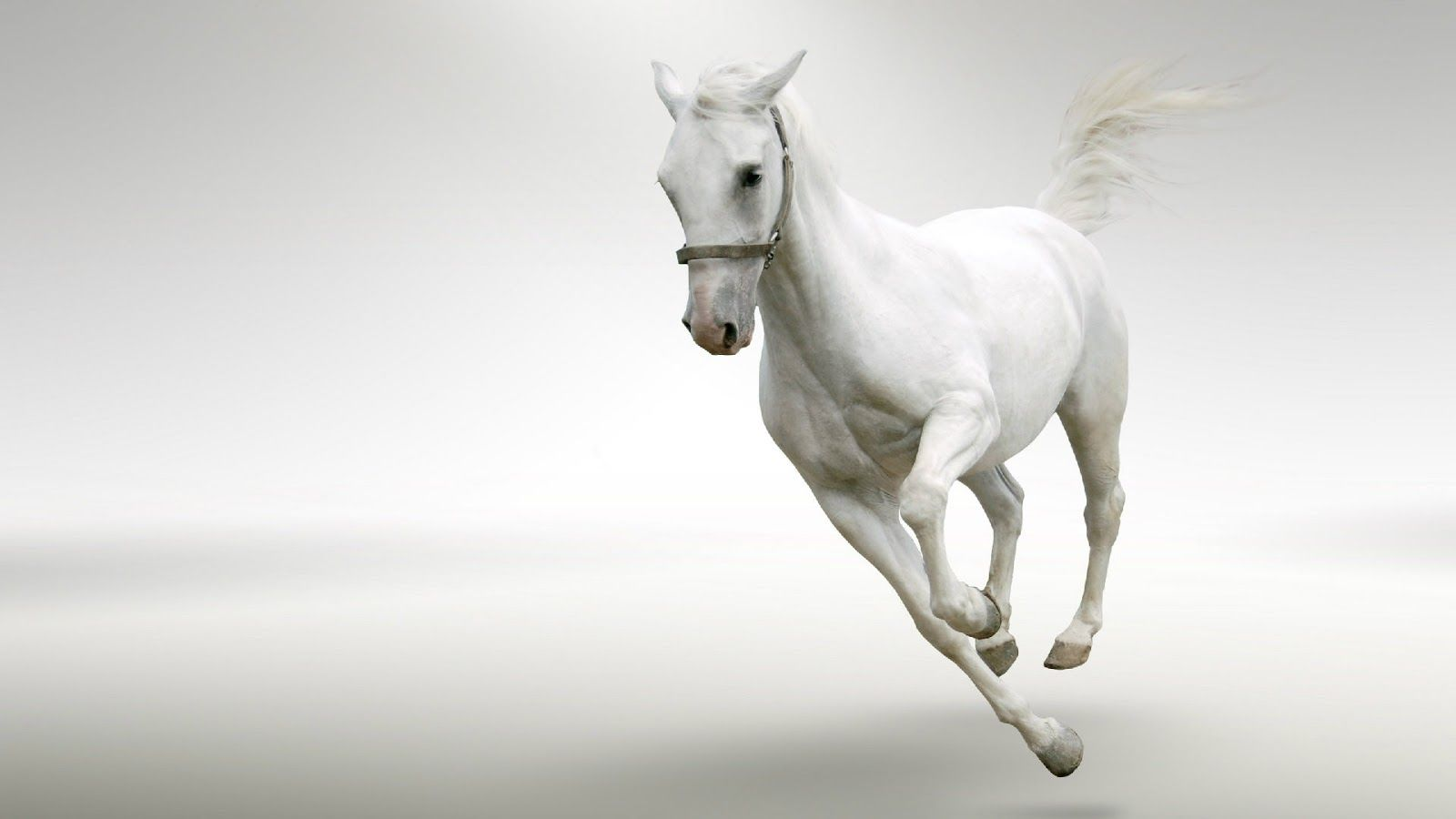 Running White Horse In Snow Wallpapers Hd Wallpaper Pic White Horses Horse Wallpaper Horses