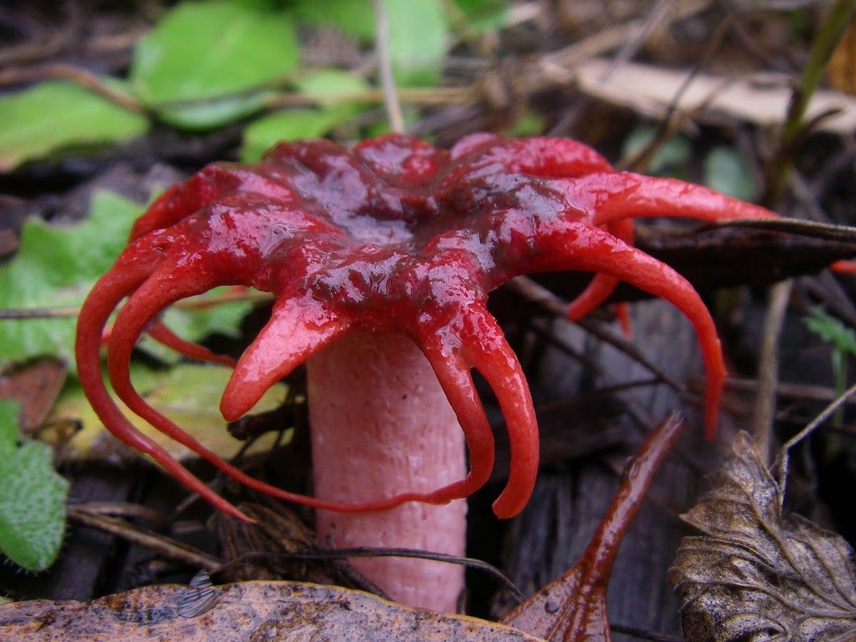 Weird Shaped Mushrooms 10