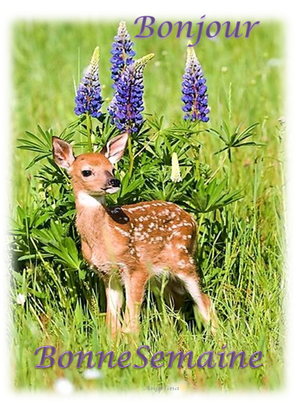 Bonjour Et Bonne Semaine A Tout Mes Ami E S Cute Animals Animals Beautiful Cute Baby Animals