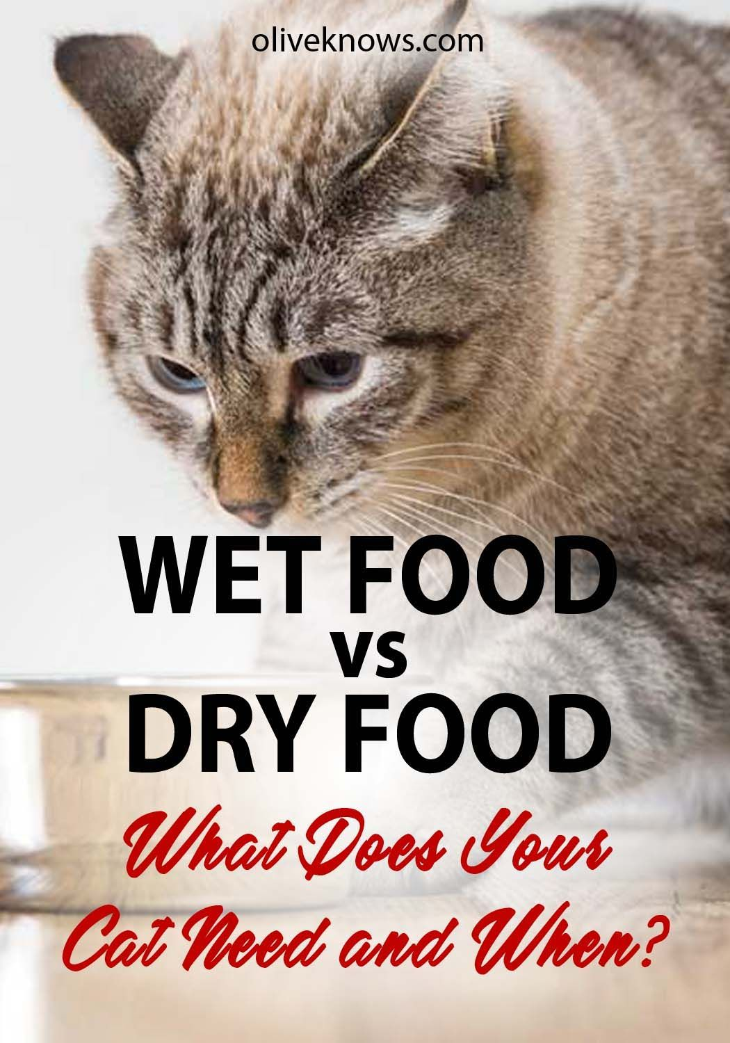 Wet Food Vs Dry Food Cat Food Reviews Cats Best Cat Food