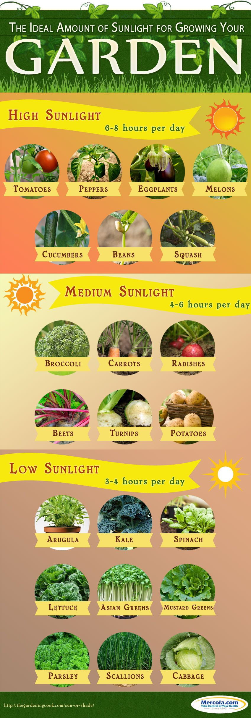 Vegetable garden graphic - Gardening Infographic More
