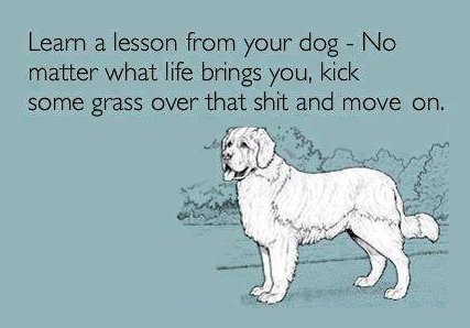 #life #quote #dog #funny #text #post