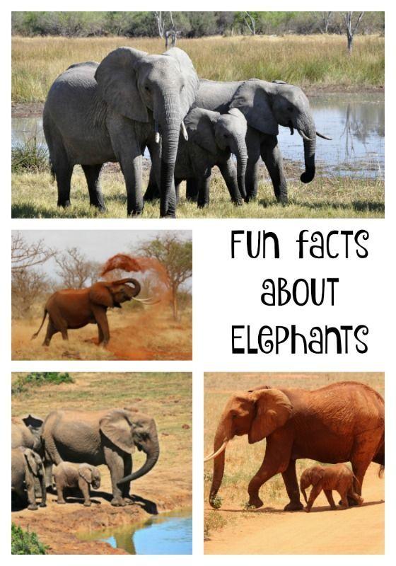 Do elephants like peanuts