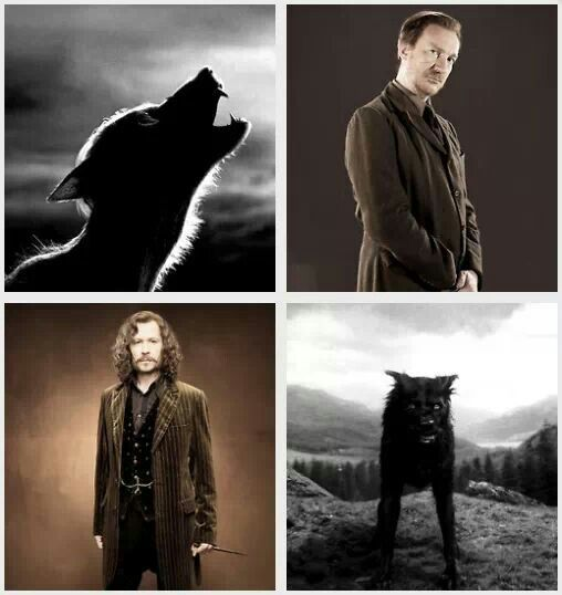 Remus Lupin And Sirius Black Sirius Blek Hogvarts Garri Potter