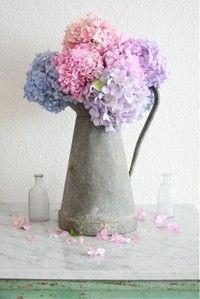 hortensias in zinc pitcher