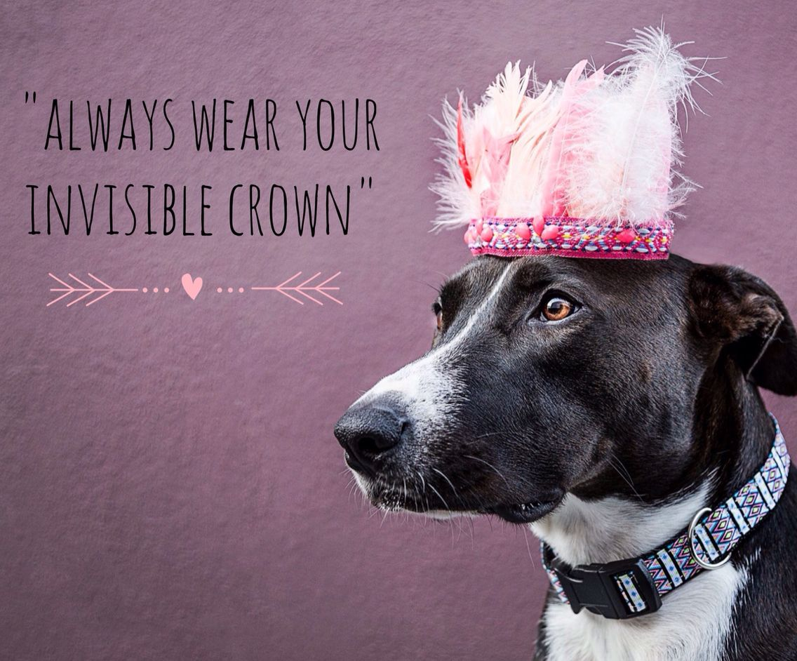Always Wear Your Invisible Crown Aztec Dog Collar Dog Photography Dog Quotes Dog Love Pitbull Mix Unique Collars And Leas Dog Love Pitbull Mix Dog Quotes