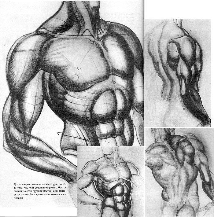 Entertainment Burne Hogarth All About Anatomy Artists Burne