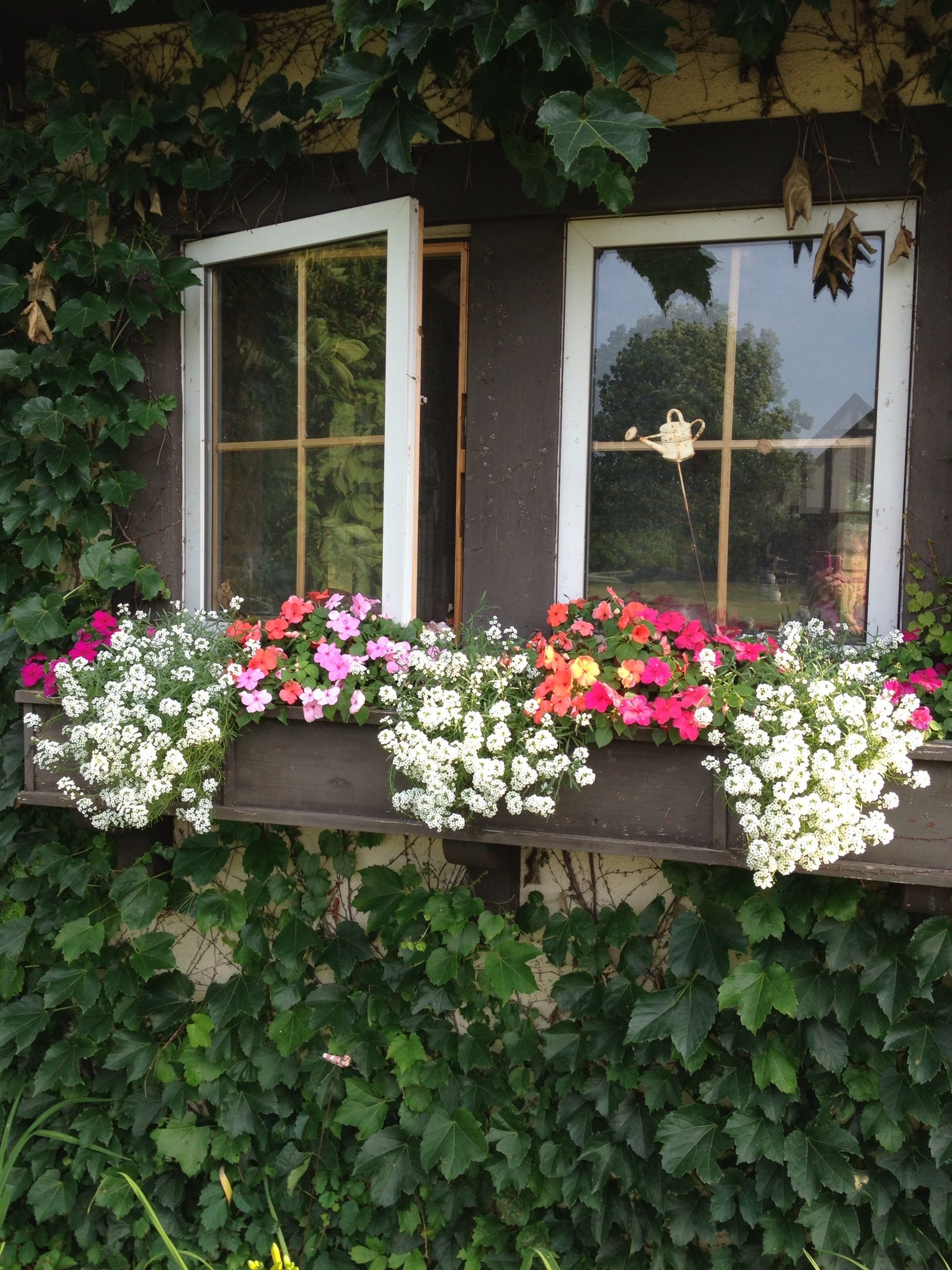 Good window box flowers for part sun in Midwest sweet