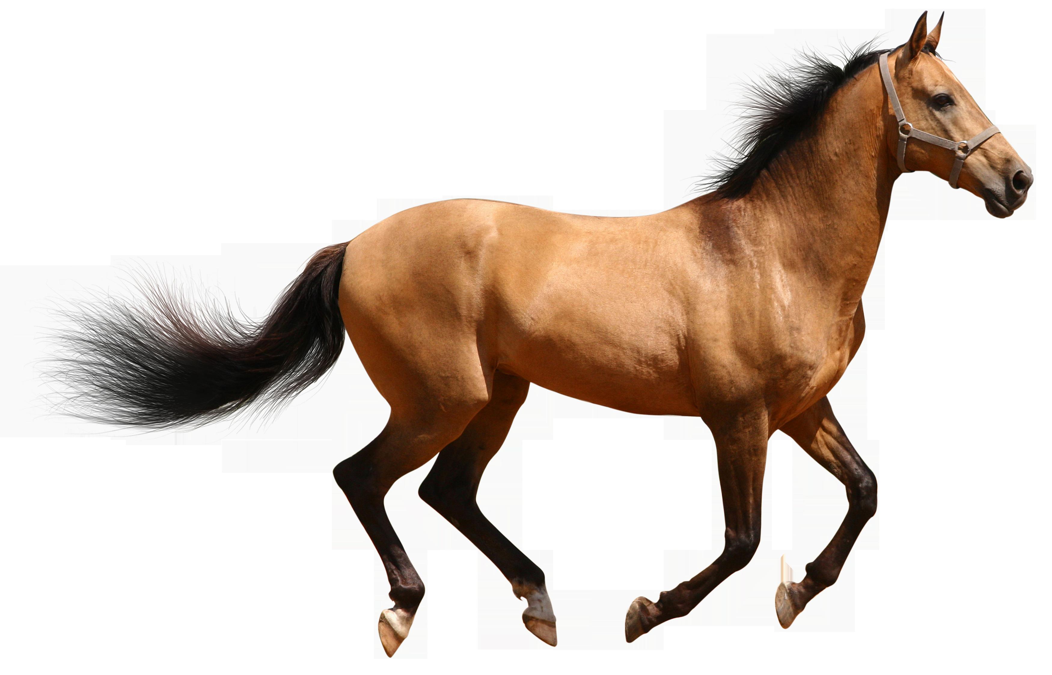 horse - google search | chelsea stewart i hope you love my stuff