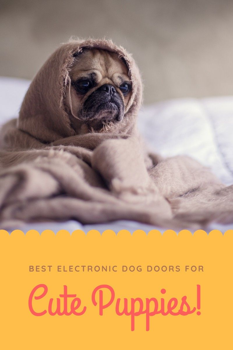 Top 7 Best Electronic Dog Door Reviews In 2020 Clever Dog Best