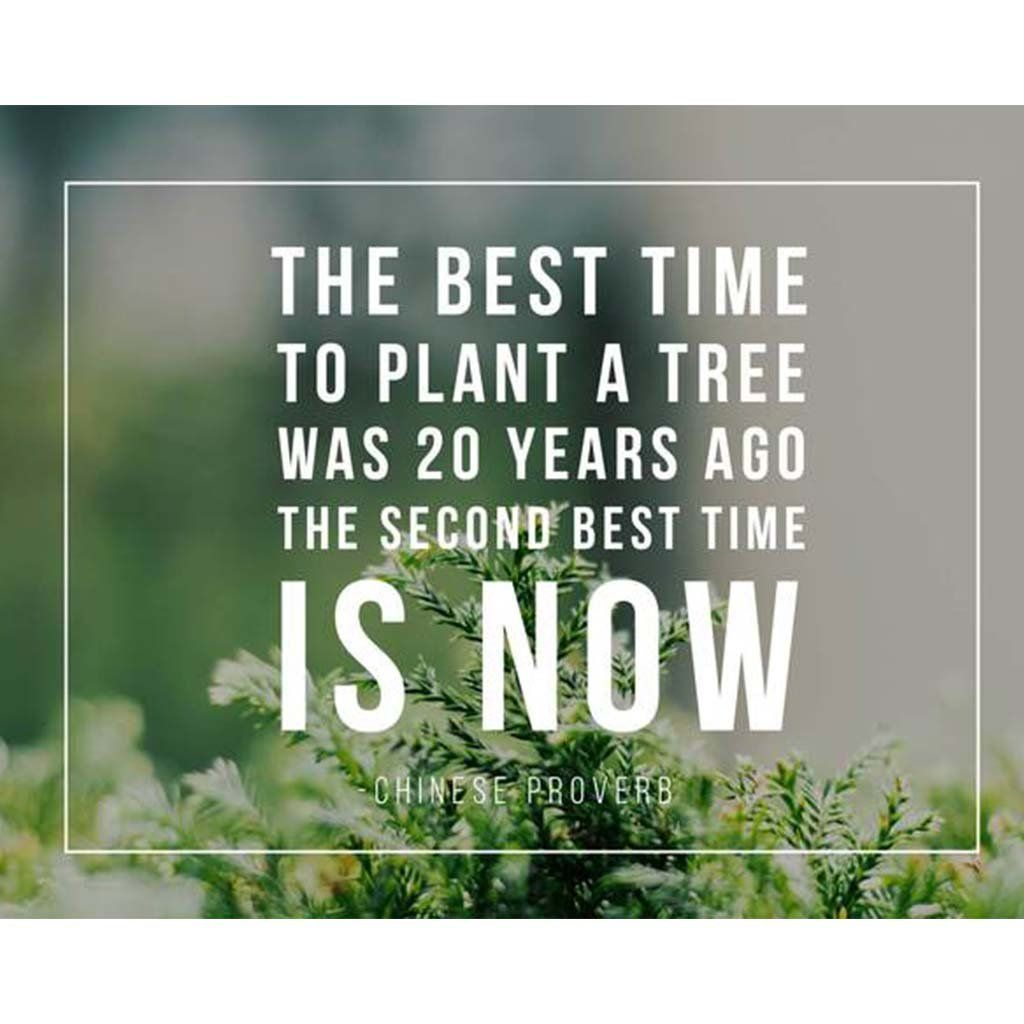 Plant some trees!  Tree quotes, Quote cards, Quotes about new year
