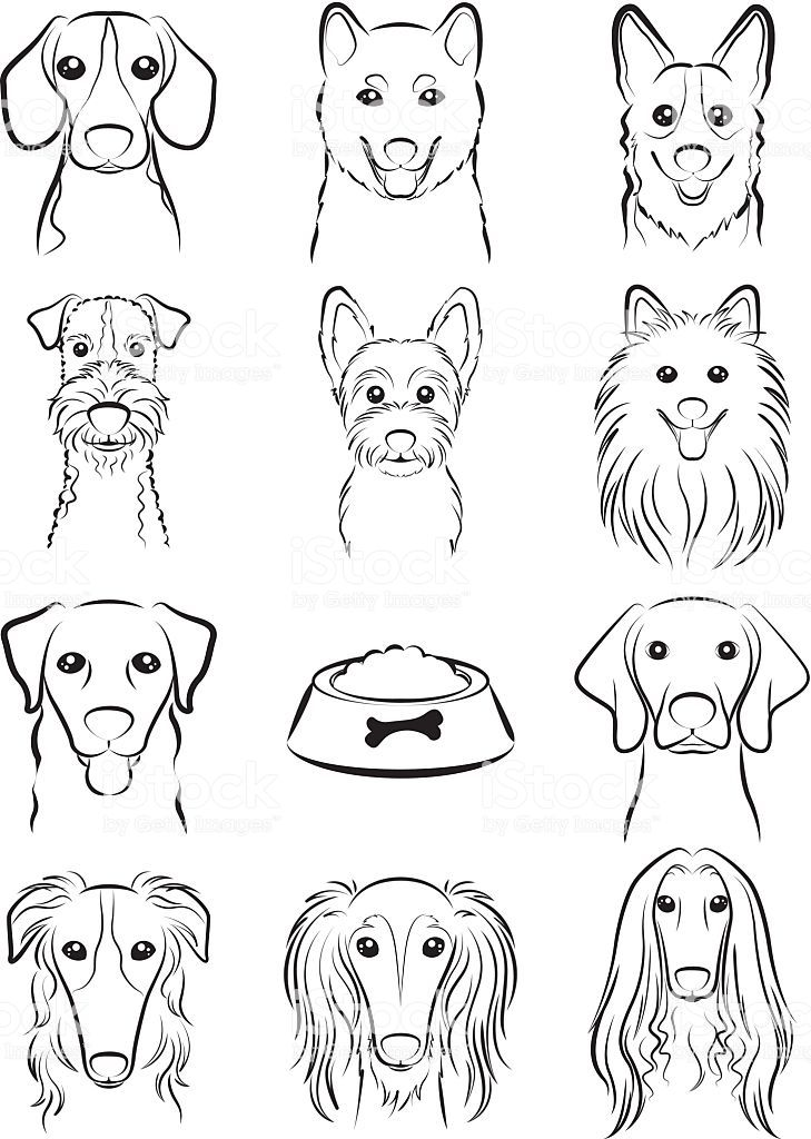 Photo of Illustration of the face of the dog
