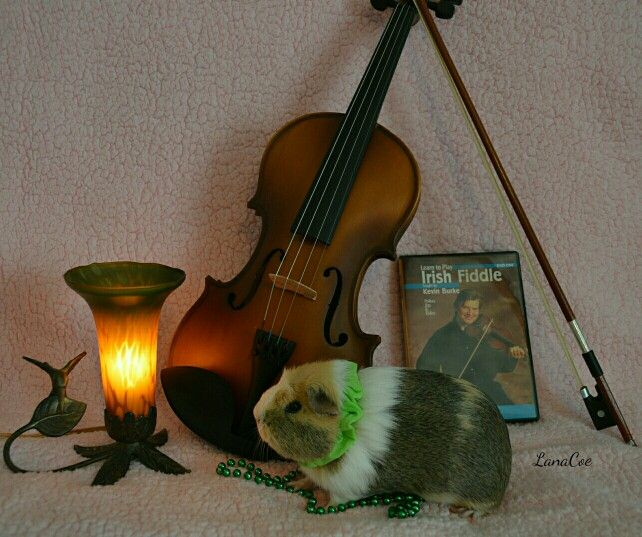 Irish Piggie