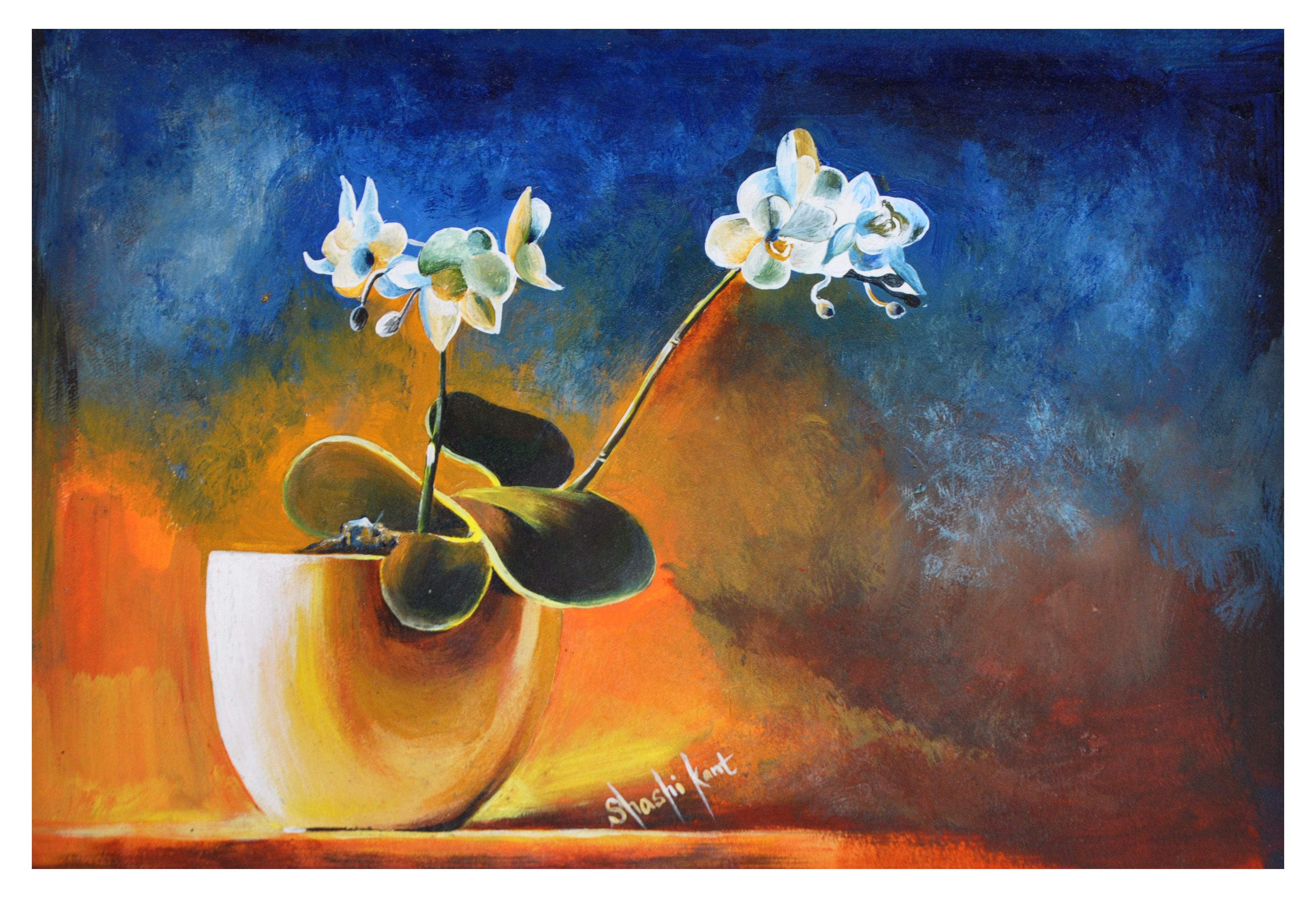 Flower Pot White Flower Object Drawing Colour Drawing