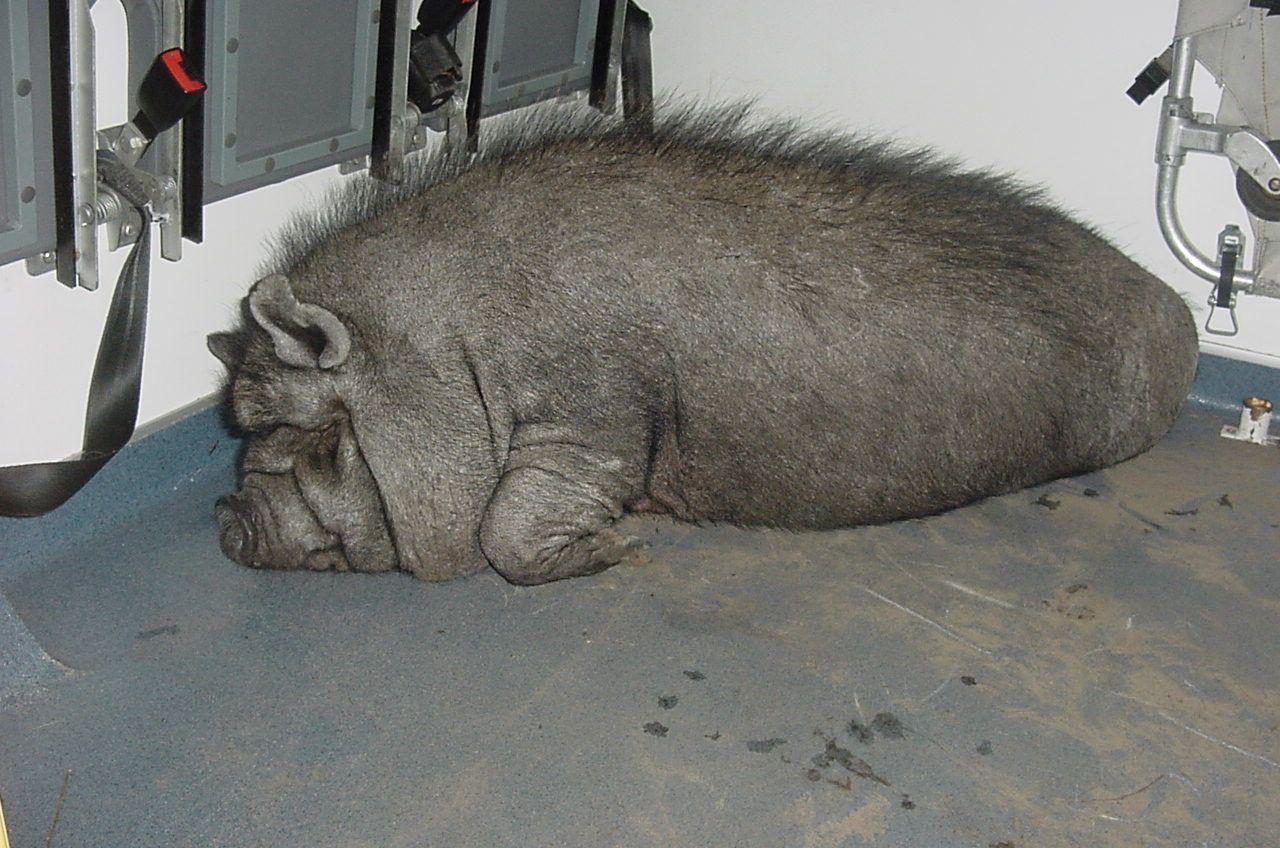 http://www.dierenambulancerotterdam.nl/darbelevenissen/20061031_02.html