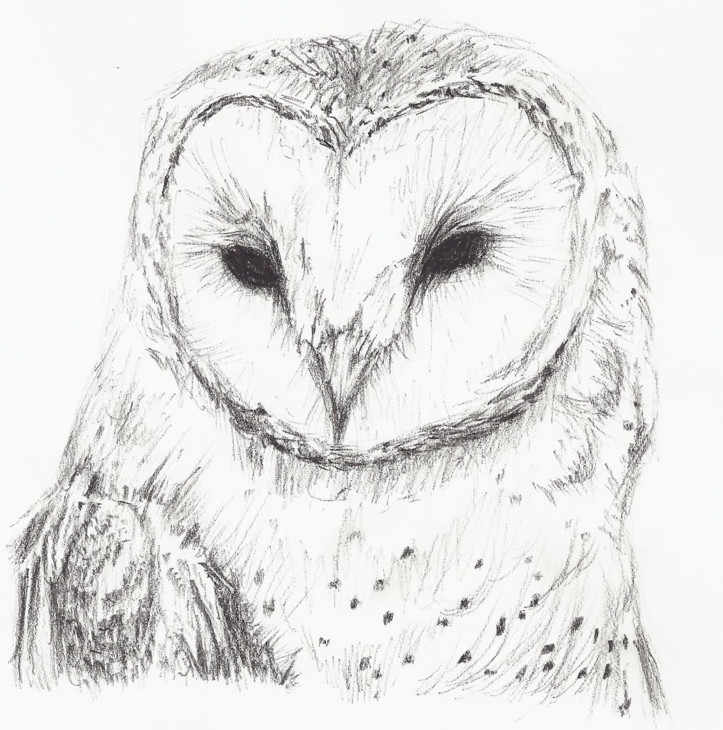 Simple Barn Owl Drawing
