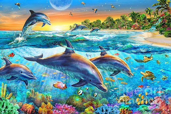 Dolphin Bay By Mgl Meiklejohn Graphics Licensing Dolphin Art