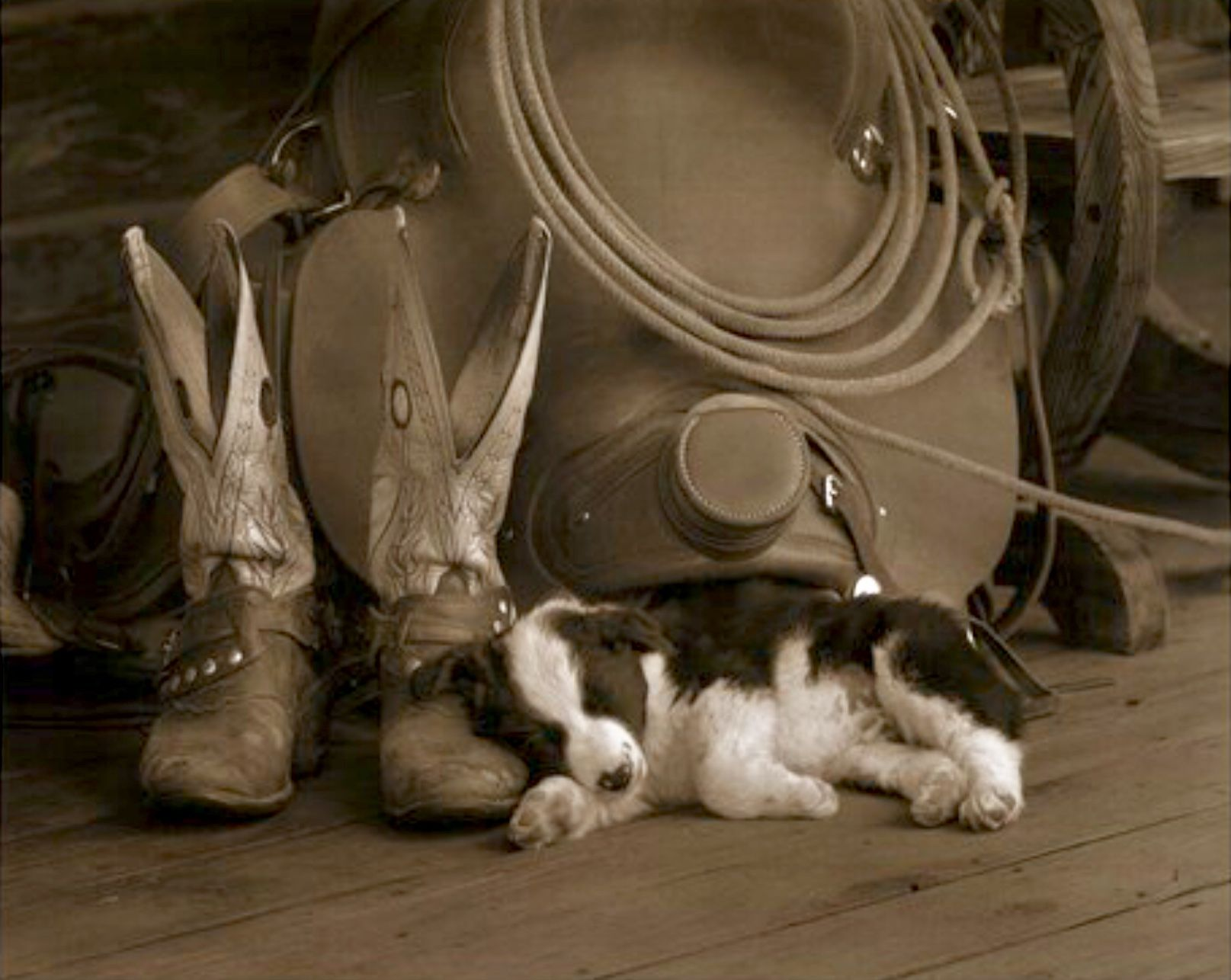 Cowboyus cute border collie puppy sleeping by his masterus boots