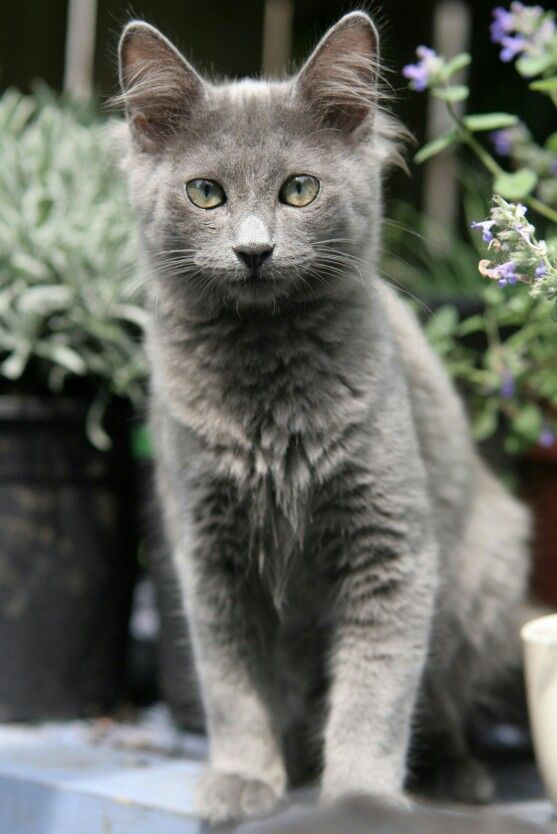 Mystic Is A Beautiful She Cat With Strikingly Blue Eyes And A Pale Pelt She Has A Rivalry With Valor Open Image Chat Chats Et Chatons Chats Adorables