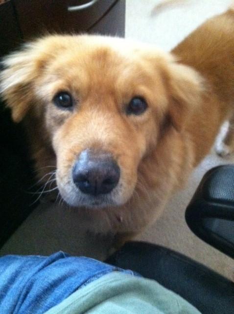 Adopt Josh On Cute Animals Pet Adoption Adoption